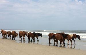 wildhorses6