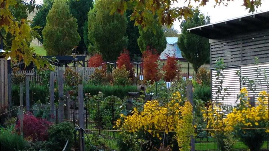 Blackwood Ridge – Kitchen garden view