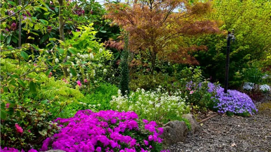 Garden – Woodland spring