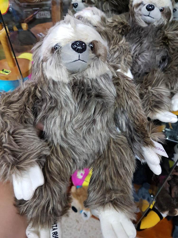 Coati - Nasenbär