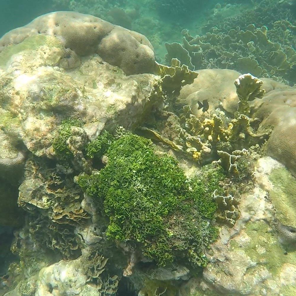 Nicht nur die Fische sind sehenswert, sondern auch die Korallen.