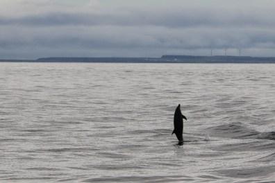 Tanzende Delfine begleiteten unser Schiff.