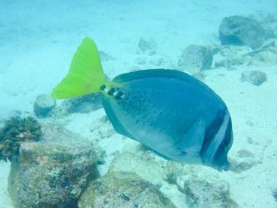 Manchmal kommen die Fische ganz nah :-)