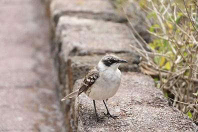 Auf dem Weg zum Strand begleiteten uns die kleinen Vögel.