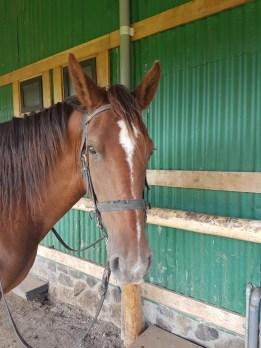 Eines der 60 Pferde