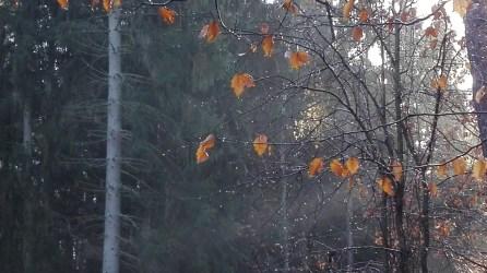 wald-licht-auf-regentropfen-27-12-2016