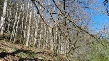 Ruinen Langenthaler Hof - Wald 2
