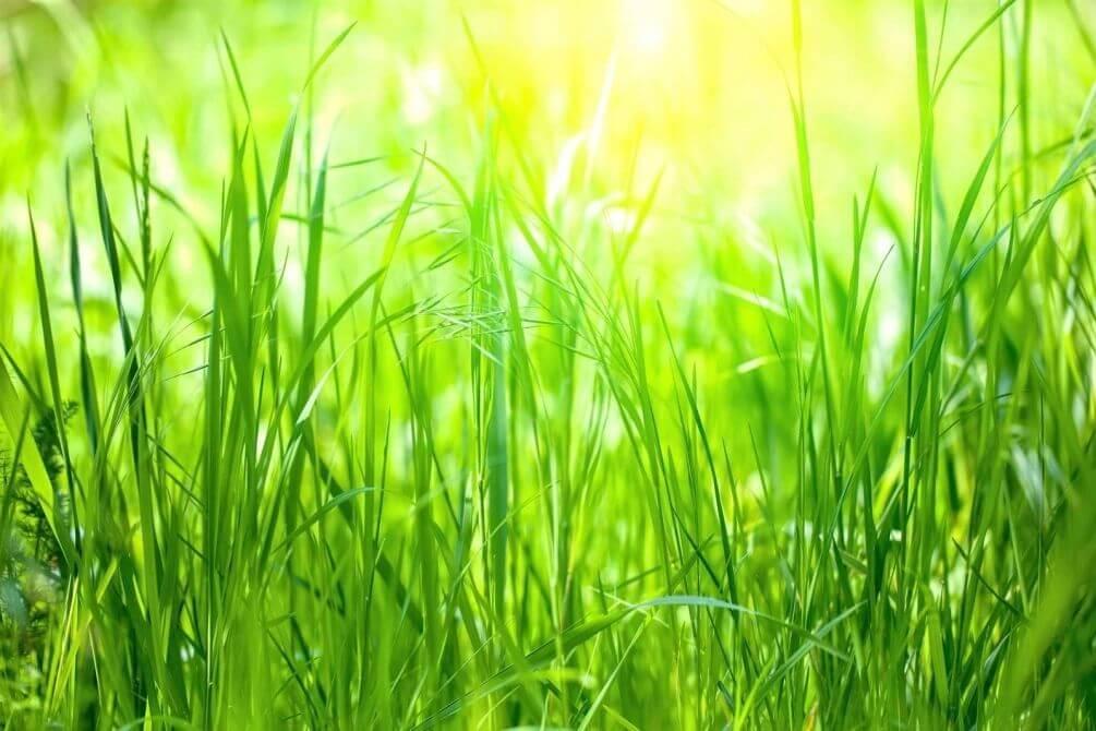Покос травы в Новосибирске
