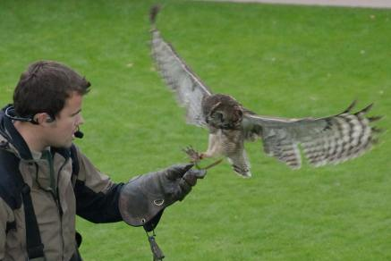 An owl and its handler during a falconry display at Combe Martin Wildlife and Dinosaur Park