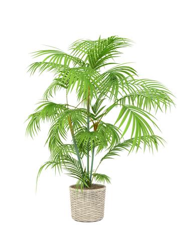 Une belle plante chez moi ?