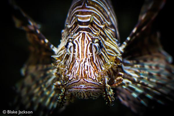 Blake Jackson Creative | Georgia Aquarium (13)
