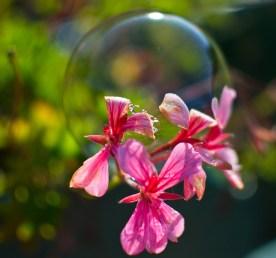 3 fleurs bulle