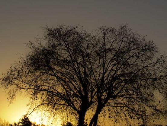 arbre_modifié-1