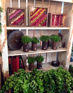 Dried flower wall decor and succulents in antique cans by Dirt