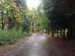 2013 Greenhall Tracks cleared & edged (PV)