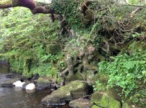 2014 Evidence of stone foundations of the Ruined mill