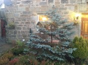 2012 Tree outside Croftfoot (PV)