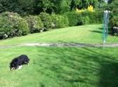 2012 May Croftfoot Gardens, High Blantyre (PV)