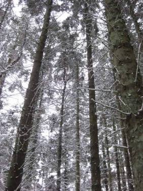 2010 Trees at Greenhall shared by Louise Wilson