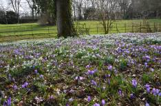 2015 Greenhall Crocus Carpet by Andy Bain