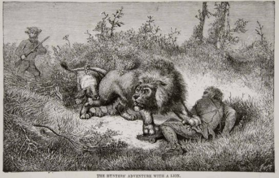 1884 Engraving of Livingstone attack by Lion