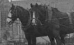 1940s Horses at Wheatlandhead