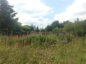 Brown's Land, Auchentibber Aug 2015 (PV)