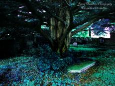 2015 October Photoshoot in Kirkyard shared by Janice Hamilton