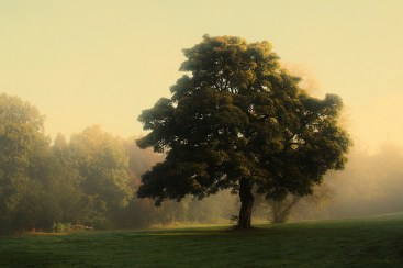 Greenhall Estate, 1st October 2015 shared by George Young