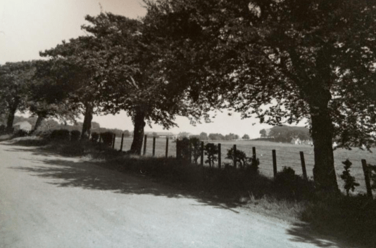 1950s Trees at Loanend Cottages