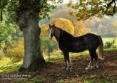 2016 Calder Horse by Jim Brown