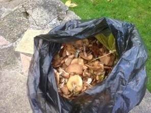 2015-mushrooms-at-kirkton