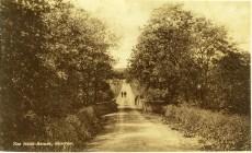 1920s Top of the Hand Bridge