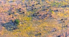 BLQ_Botswana