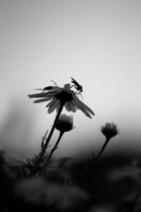 tiere natur insekten makro closeup bw sw schwarz weiß