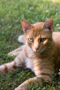 Filou Kater Katze