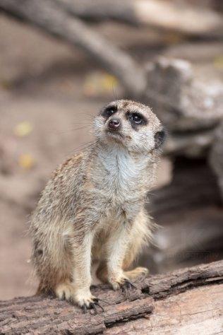 Zoo_Halle_Gera