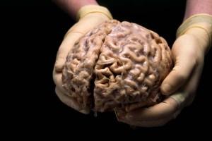 Human_brain_hands00_2