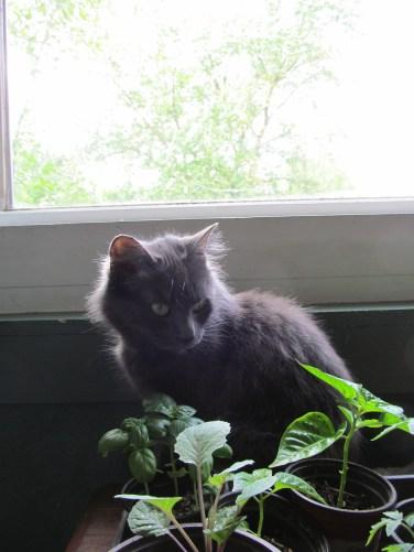 wasabi garden guardian