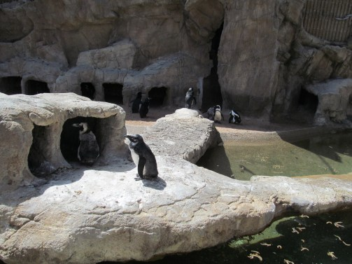 penguin gathering