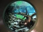 aquarium window