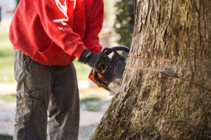 Tree removal: Blazer Tree Services, Richmond VA area