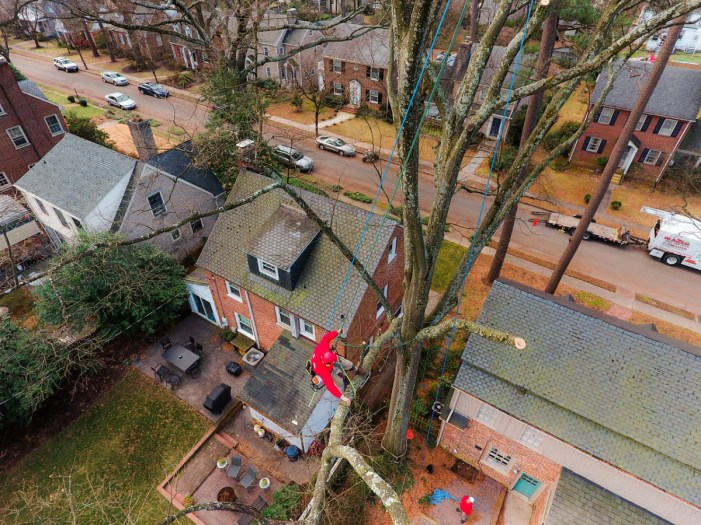 Tree removal: Blazer Tree Services, Richmond VA area