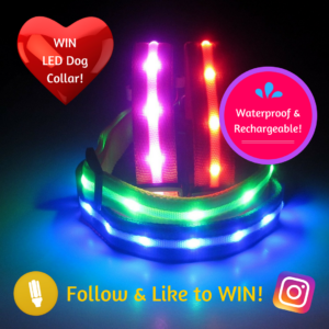 Giveaway - Free LED Dog Collar
