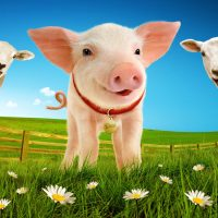 Win a Family Ticket to see Babe The Sheep-Pig at Venue Cymru