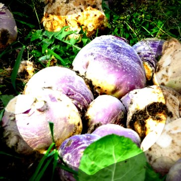 Building Resilience: Don't Get Blood on the Turnips