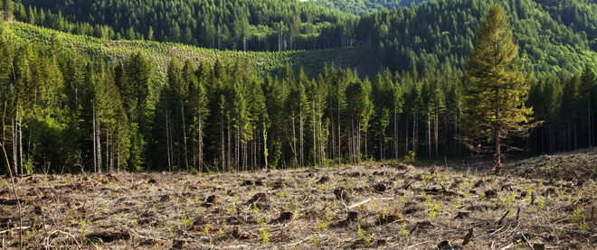 First-Strike Reforestation