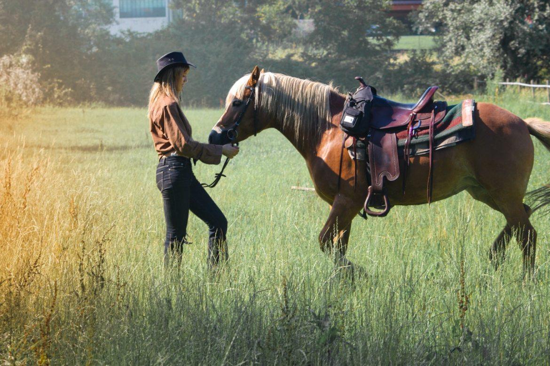 tiertherapie therapie mit pferden