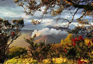 """Blossoming around Bromo volcano Indonesia, Facebook page """"Beautiful Planet Earth"""", https://www.facebook.com/pages/BEAUTIFUL-PLANET-EARTH/198320350202343?fref=ts"""