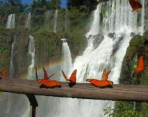 """Iguazu Falls, Facebook page """"Nature Pictures"""" https://www.facebook.com/Nature.picture.f.a , located on the river of the same name, is one of the largest waterfalls in the world. They stretch more than 2,700 feet in length, forming a series of semicircular shape. Of the 275 separate waterfalls that together make up the Iguazu Falls, the highest is the """"Devil's Throat."""""""